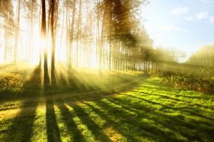 The Path to Ayurveda