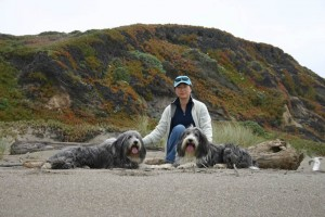 Sanghee Davidson and the Dogs