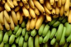 banana_01-250x166